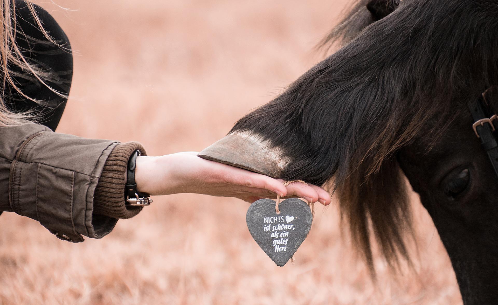 Tierhaltung mit Herz und Verstand