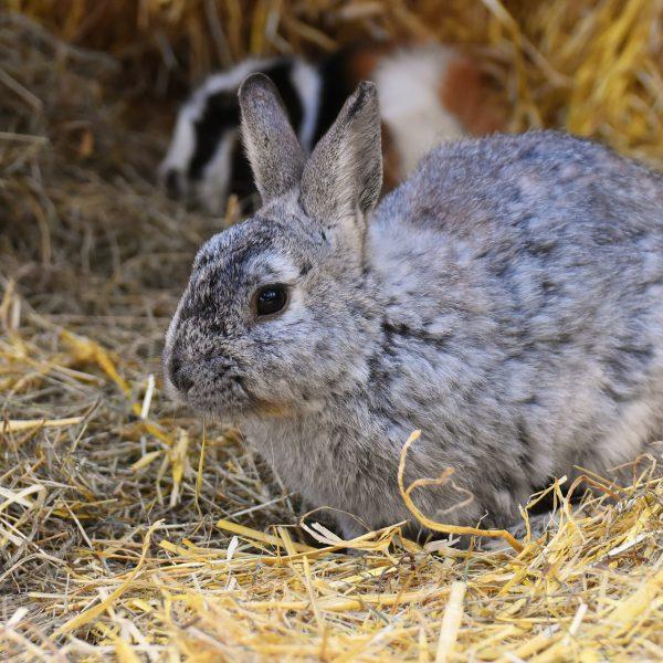 Kaninchenzucht